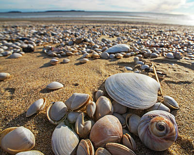 Photograph - Sea Shells On Revere Beach Revere Ma by Toby McGuire