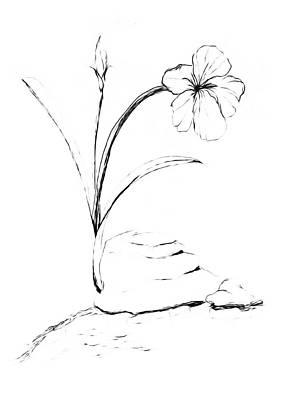 Drawing - Sea Side Wild Flower Paint My Sketch by Delynn Addams
