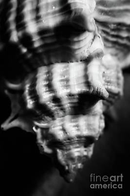Andy Fisher Test Collection - Sea Spiral  by Jorgo Photography - Wall Art Gallery
