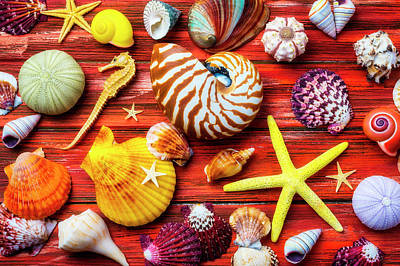 Photograph - Sea Star And Colorful Seashells by Garry Gay