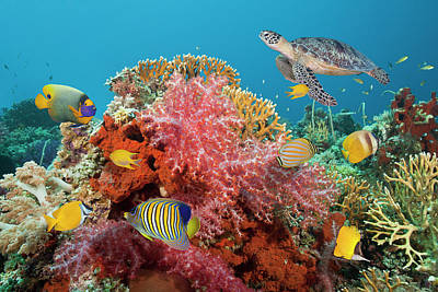 Photograph - Sea Turtle And Colorful Fish On A Coral by Jeff Hunter