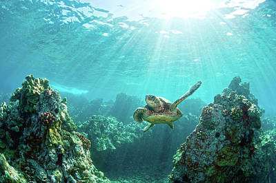 Photograph - Sea Turtle Coral Reef by M.m. Sweet
