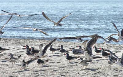 Photograph - Seabird Chaos by JAMART Photography