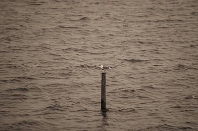 Photograph - Seagul On Piller by Dan Urban