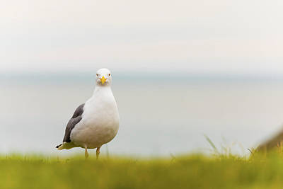 Beach Royalty-Free and Rights-Managed Images - Seagull 4 by Brian Knott Photography