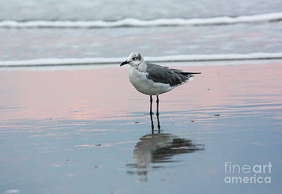 Photograph - Seagull At Ocean Shoreline by Kevin McCarthy