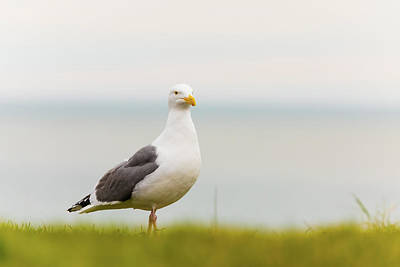 Beach Royalty-Free and Rights-Managed Images - Seagull by Brian Knott Photography