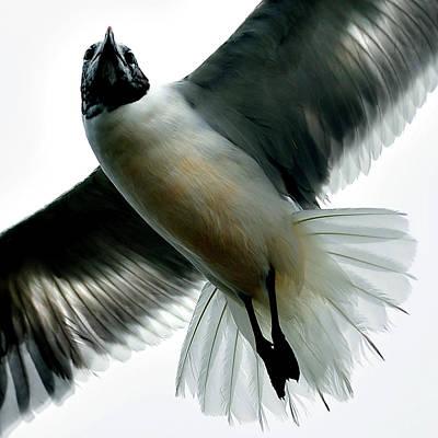 The Bronx Photograph - Seagull by Carlos. E. Serrano