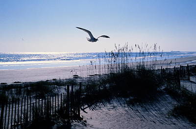 Photograph - Seagull Flying Over Beach by Colorstock