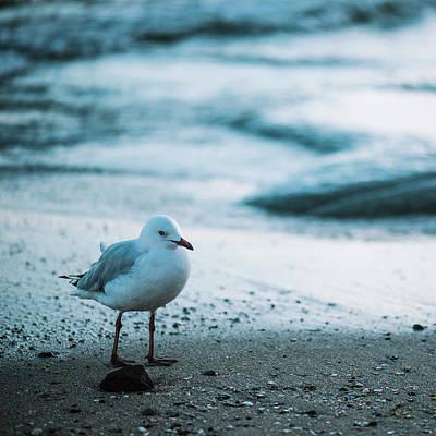 Photograph - Seagull On The Beach. by Rob D