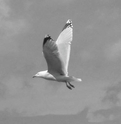 Photograph - Seagull Over Llandudno by JLowPhotos