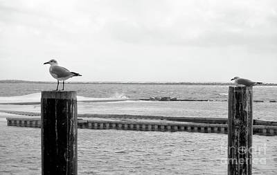 Sea Wall Art - Photograph - Seagulls by Megan Cohen