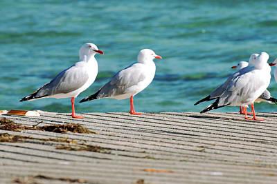 Photograph - Seagulls On The Beach. by Rob D