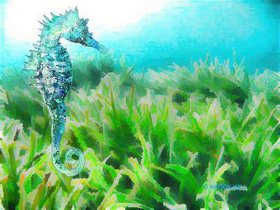 Digital Art - Seahorse by Marlene Watson