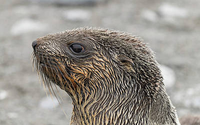 Photograph - Seal Of Approval by Alex Lapidus