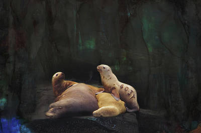 Photograph - Sealions by Marilyn Wilson