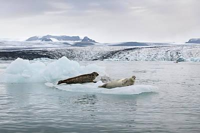 Photograph - Seals On An Iceberg In Jokulsarlon Glacier Lagoon by RicardMN Photography