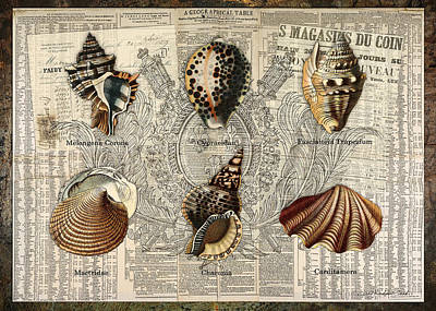Digital Art - Seashell Collection Two by Terry Kirkland Cook