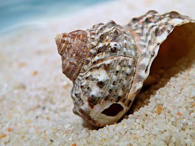 Photograph - Seashell by Micki Findlay