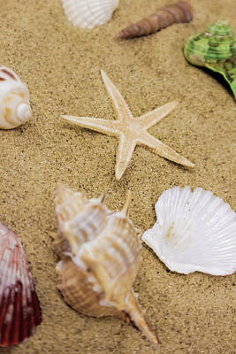 Still Life Royalty-Free and Rights-Managed Images - Seashells and Sand by Grace Carpenter