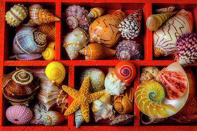 Photograph - Seashells In Shadow Box by Garry Gay