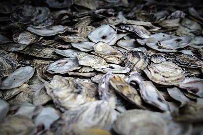 Photograph - Seashells by Juan Contreras