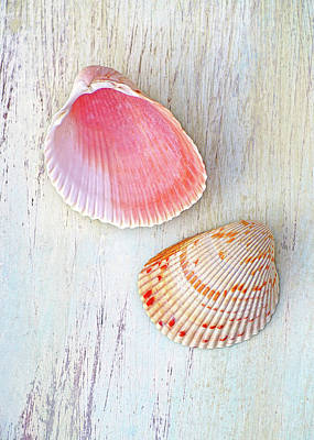 Photograph - Seaside Bounties by Kathi Mirto