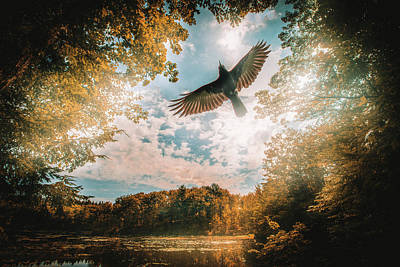 Photograph - Season Of Change by Bob Orsillo