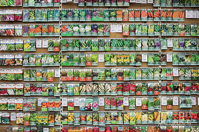 Photograph - Seed Packet Dispaly by Tim Gainey