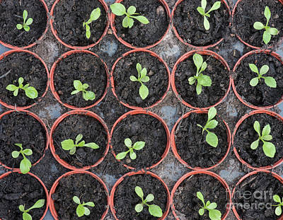 Photograph - Seedlings by Tim Gainey