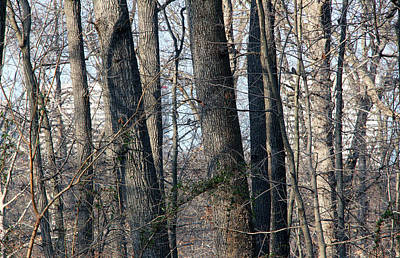 Impressionist Landscapes - Seeing Rosslyns Twin Towers Through Arlington Trees by Cora Wandel