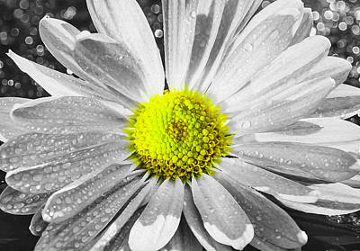 Photograph - Selective Yellow Color Chrysanthemum by Keith Smith