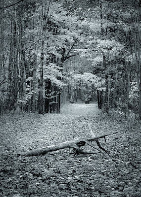 Photograph - Selenium Trail  by David Heilman