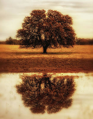 Photograph - Self Reflection by Marnie Patchett