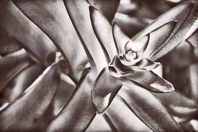 Photograph - Sensual Succulent I by Leda Robertson