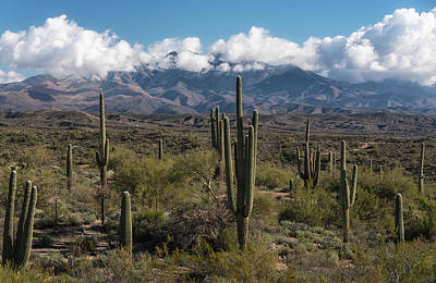 Photograph - Sentinels Of The Sonoran  by Saija Lehtonen