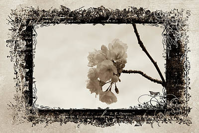 Photograph - Sepia Blossoms by Marilyn Wilson