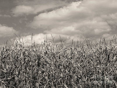 Photograph - Sepia Field Of Corn by Phil Perkins