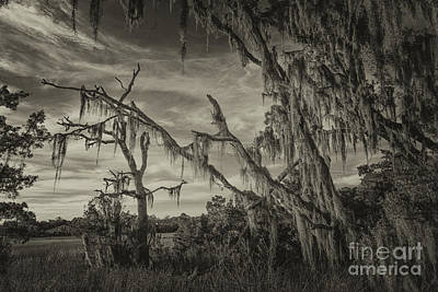 Photograph - Sepia Spanish Moss Factory by Dale Powell