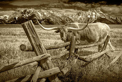 Photograph - Sepia Tone Of Longhorn Steer In A Pasture By A Wood Log Fence by Randall Nyhof