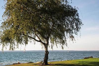 Photograph - September Birch In Marine Park by Tom Cochran