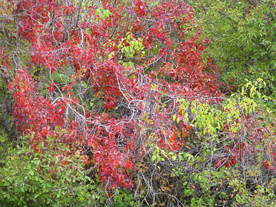 Wall Art - Photograph - September Symphony In Red And Green by Cris Fulton
