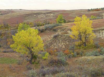 Wall Art - Photograph - September Trees Reverie by Cris Fulton
