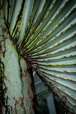 Photograph - Green Abstract Series No.4 by Juan Contreras