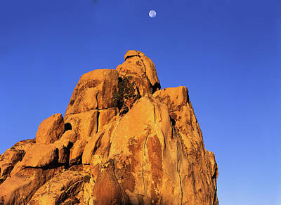 Photograph - Setting Moon Over Rock Top Tree by Paul Breitkreuz