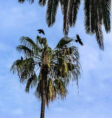 Photograph - Seven Crows In A Palm Tree by Gene Parks