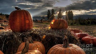 Owls - Several Pumpkins And Hay On Farm Ultra HD by Hi Res