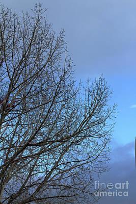 Photograph - Shades Of Blue by Ann E Robson