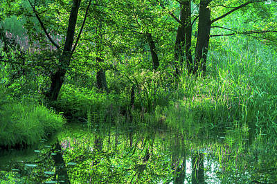 Photograph - Shades Of Green In The Spreewald by Sun Travels