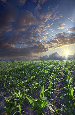 Photograph - Shades Of Life by Phil Koch